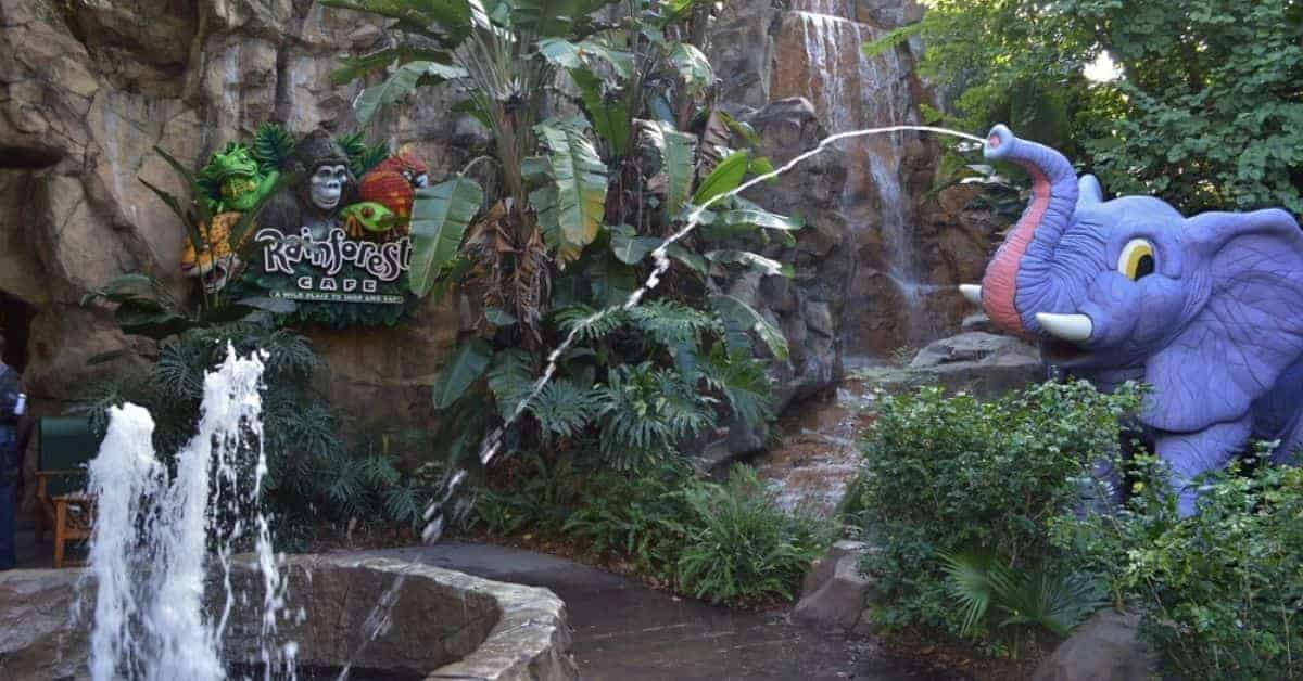 Rainforest Cafe in Animal Kingdom