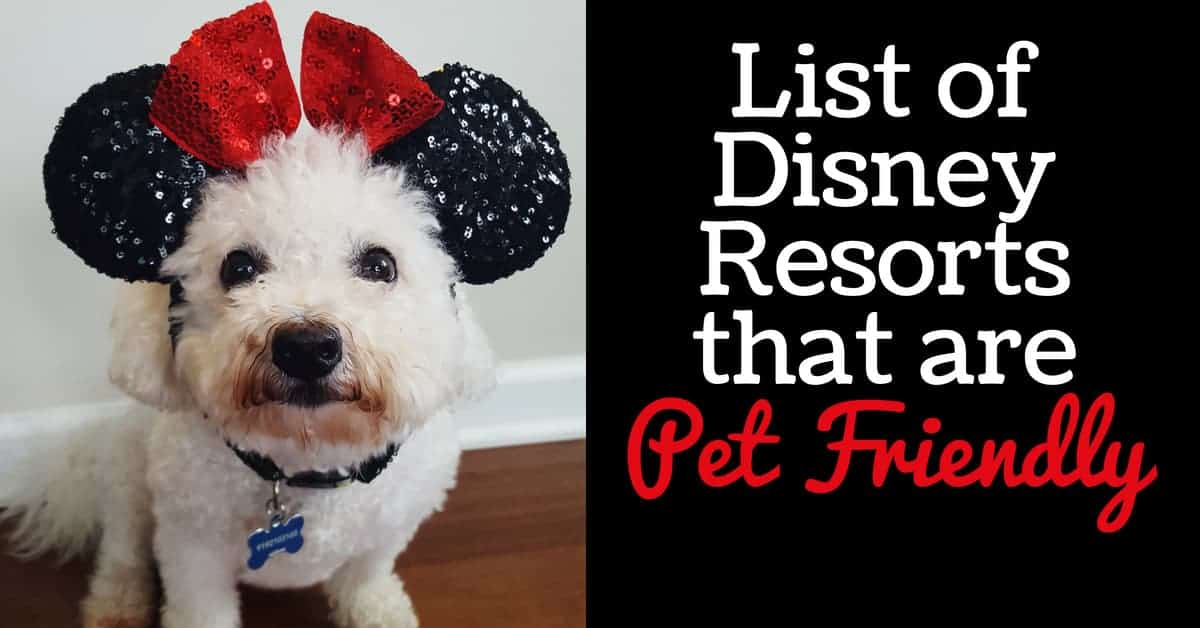 List Of Disney Resorts That Are Pet Friendly Disney