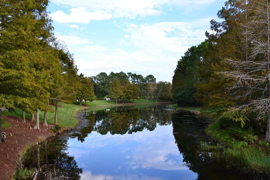 Natural Areas at Port Orleans Riverside