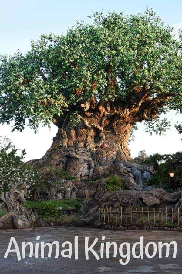 Animal Kingdom Park at Walt Disney World