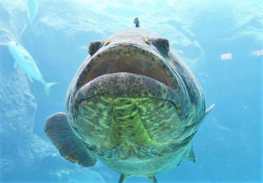Fish at Atlantis Resort in Bahamas