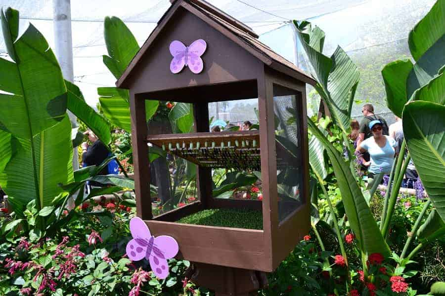 Epcot Butterfly House at Flower & Garden Festival