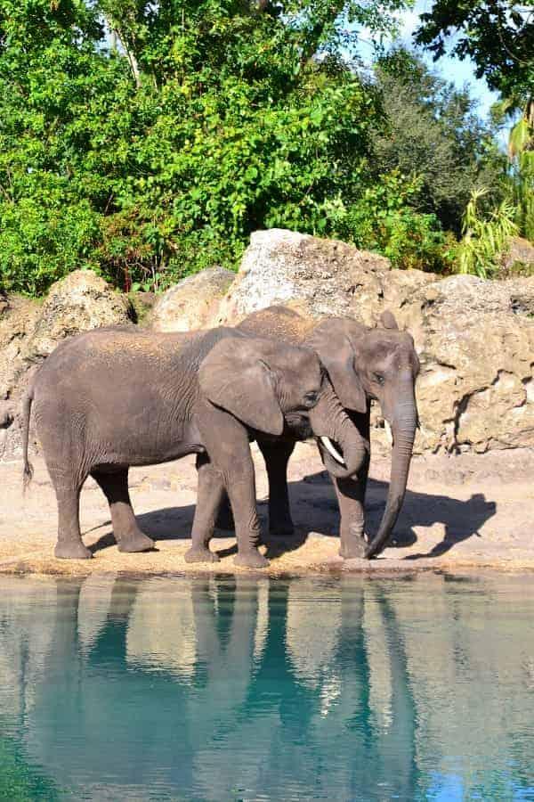 See Elephants on Kilimanjaro Safari
