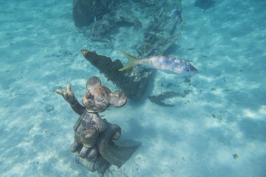 Snorkel at Castaway Cay