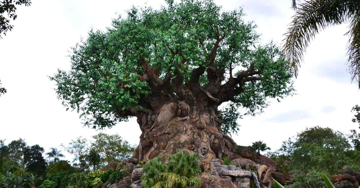 Disney World's Animal Kingdom park