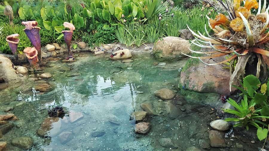 Ponds of Pandora
