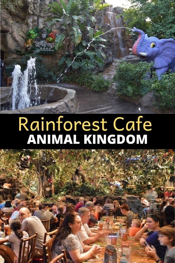 Rainforest Cafe Animal Kingdom Location